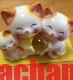 Gia đình mèo cầm ngọc vàng