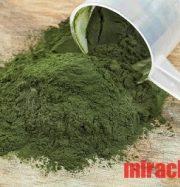 Review tảo xoắn spirulina
