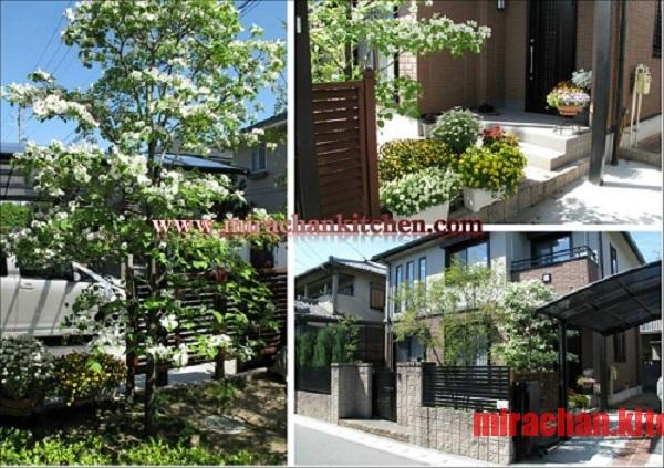 Khu phố người già ở Nhật