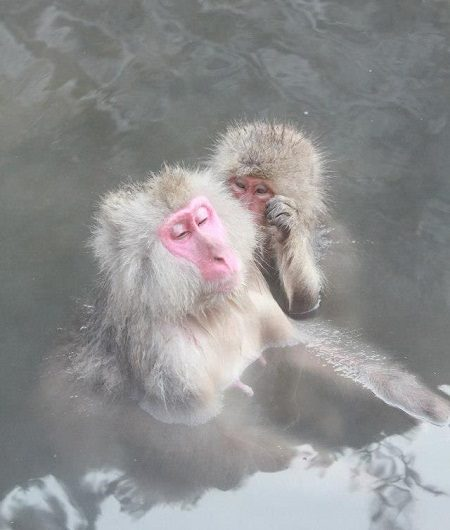 Khỉ tắm Onsen
