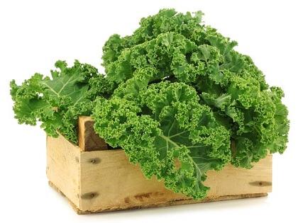 Bột cải xoăn Kale Yamamoto Kanpo