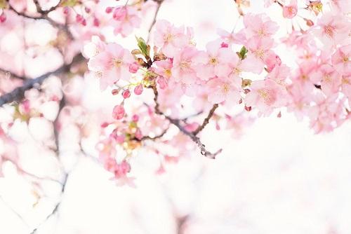mỹ phẩm thiên nhiên Nhật Bản