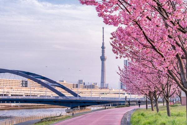 sông Sumida