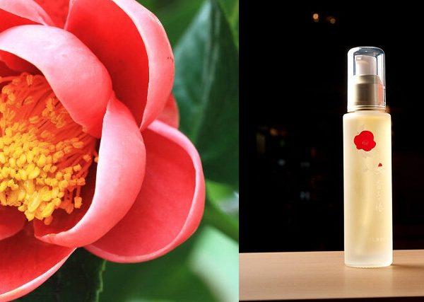 Tinh dầu hoa trà Nhật Bản mua ở đâu?