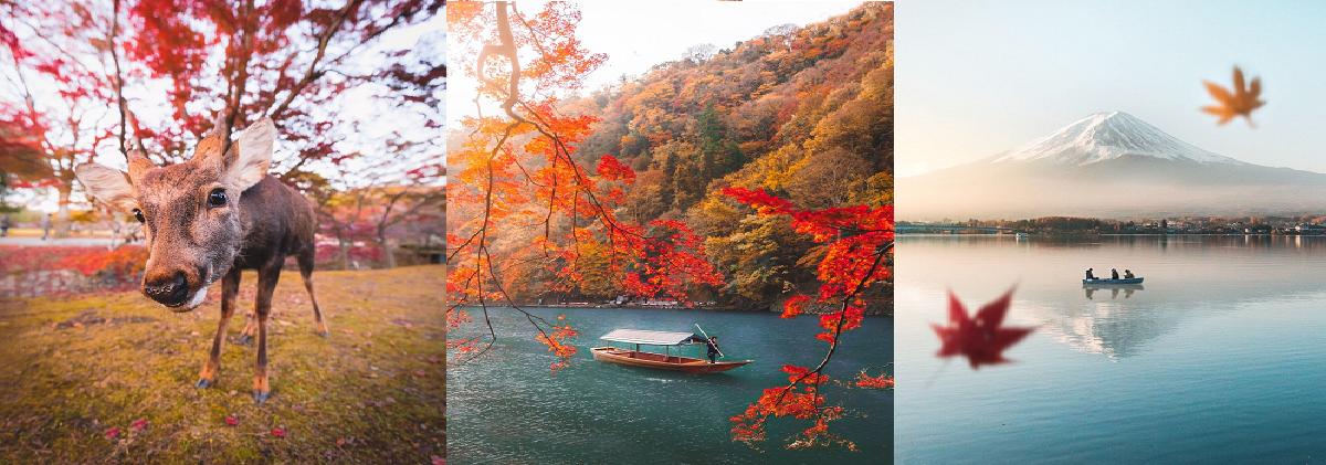 Những hình ảnh mùa thu Nhật Bản đẹp như tranh - Phần 1