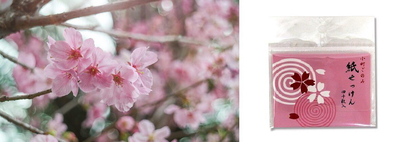 Xà phòng giấy Sakura