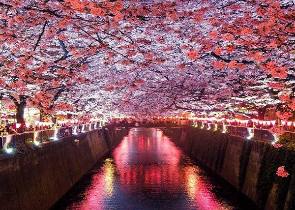 tokyo sakura 2019