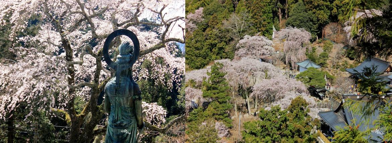 Minobusan Kuonji