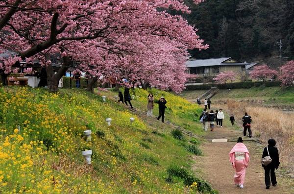 Người Nhật thích người nước ngoài