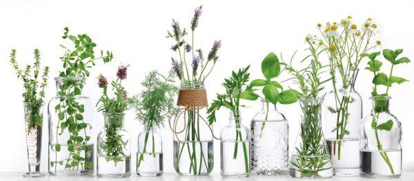 Mỹ phẩm Organic là gì - Xác nhận Organic