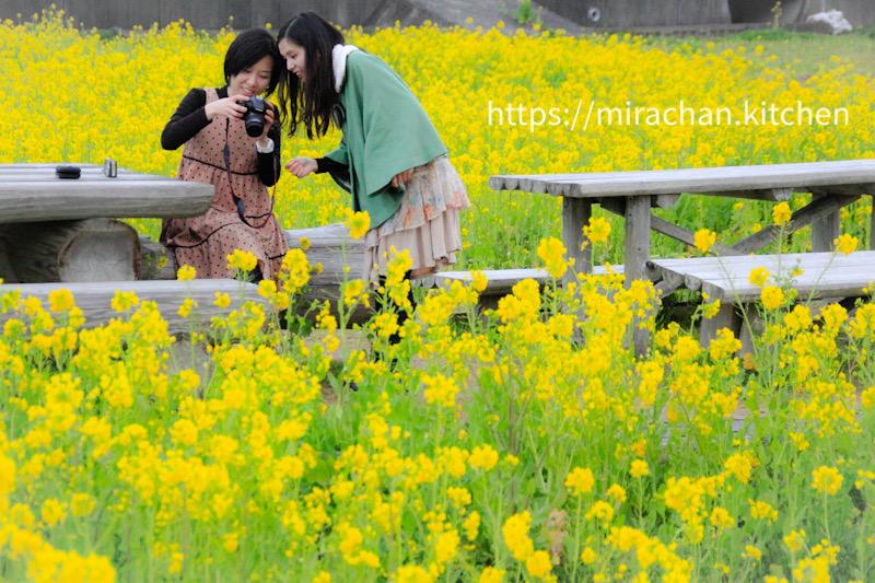 hoa anh đào kawazu zakura