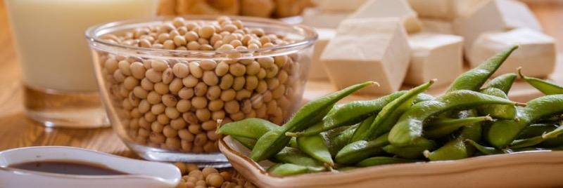 Soy Protein của Nhật từ đậu nành