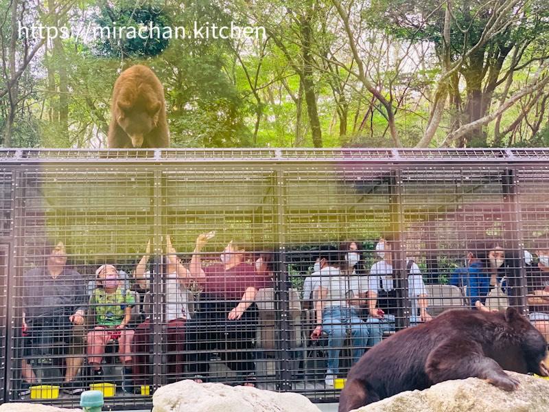 Công viên sở thú Safari Park Nhật Bản